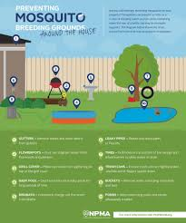 how to prevent mosquito breeding grounds around your house and