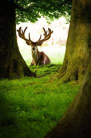 best 25 deer family ideas on pinterest animals with antlers