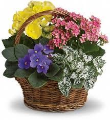 flower delivery cincinnati florists flowers in oh baysore s flower shop