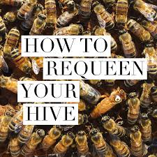 beekeeping like a how to move a beehive