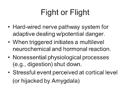 hard wired pathway anxiety disorders and medications anxiety and fear anxiety future