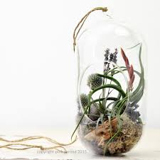 lavender air plant terrarium u2013 ps terrariums