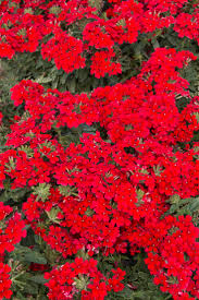 48 best front yard full sun images on pinterest plant catalogs