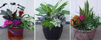 Container Garden Design Ideas Garden Design Garden Design With Container Design U Repotting