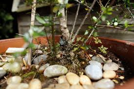 Methods Of Controlling Plant Diseases - how to handle plant suckers in the garden