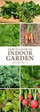 599 best home indoor plants images on pinterest indoor plants