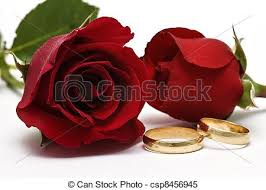 red rose rings images Wedding rings and red roses golden wedding rings and fresh roses jpg
