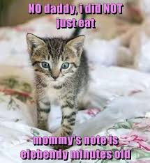 No Meme Cat - no daddy i did not just eat mommy s note is elebendy minutes old
