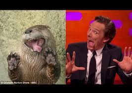 Cumberbatch Otter Meme - benedict cumberbatch otter impressions album on imgur