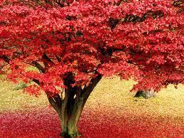 tree symbolism tree symbolism trees and their symbolic meanings