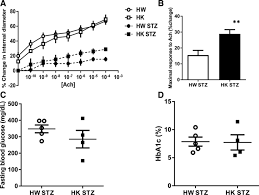 genetic deletion of nadph oxidase 1 rescues microvascular function