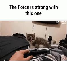 The Force Is Strong With This One Meme - the force is strong with this one gifs tenor
