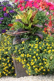 Outdoor Potted Plants Full Sun by Container Combo Ideas From Costa Farms Costa Farms