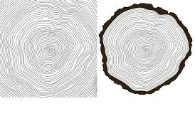 tree rings images Tree rings textures creative market jpg