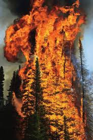 North Bay Mnr Fire by 291 Best Fire Images On Pinterest Firefighting Wildland