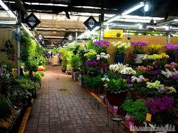 wholesale flowers near me wholesale flowers near me yangjae flower market