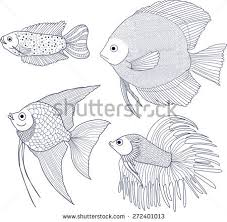 discus fish stock images royalty free images u0026 vectors shutterstock