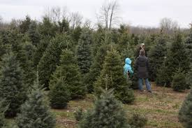 start a tradition at these michigan christmas tree farms michigan