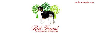 australian shepherd illinois home page
