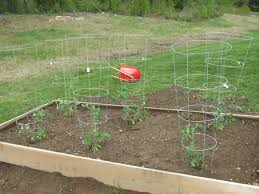 raised bed vegetable gardens how to build