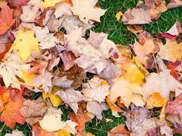 in fall fall u2013 categories u2013 mmt