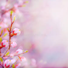 beautiful spring art beautiful spring blossoming tree on sky background stock image