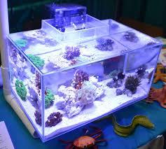 fluval edge marine light saltwater tanks of the aquatic experience 2016