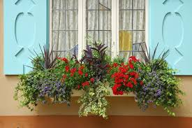 What To Plant In Window Flower Boxes - 32 stunning flower box ideas u0026 arrangements