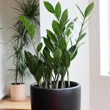 welltended shop for house plants online with free delivery