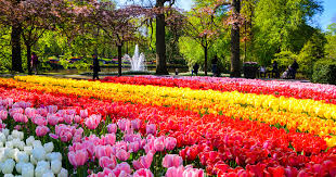 things to do in amsterdam netherlands tours u0026 sightseeing