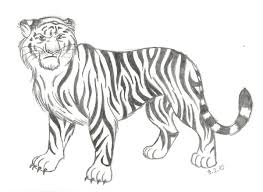 pictures tiger pencil sketches drawing art gallery