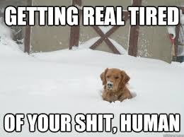 Getting Real Tired Meme - getting real tired of your shit human misc quickmeme