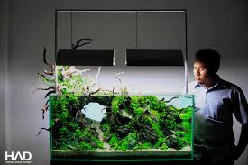 Aquarium Decoration Ideas Freshwater Simon U0027s Aquascape Blog Aquascaping Tanks Pinterest