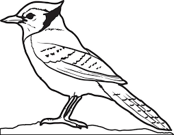 free printable blue jay coloring kids