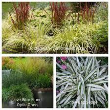 designing with ornamental grasses sublime garden design
