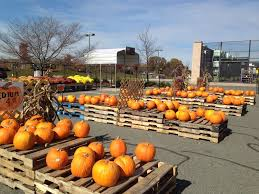 Chesterfield Pumpkin Patch 2015 by Goth Gardening O October 2015
