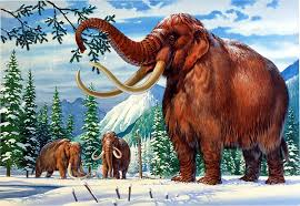 woolly mammoth dna successfully spliced elephant cells