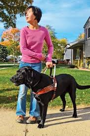 How Does A Guide Dog Help A Blind Person Boulder Guide Dog Puppies Braille Pinterest Guide Dog And Dog