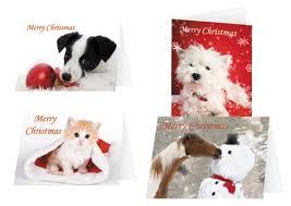 ispca ireland irish spca animal charity rescue dogs cats
