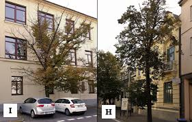canap ap itifs methods of trees evaluation with the site specific effect for