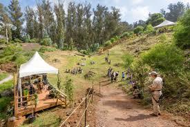native hawaiian plant nursery the original maui zipline with skyline eco adventures in hawaii