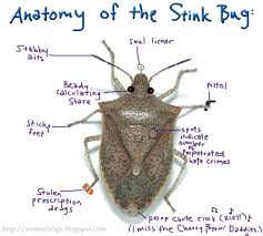 Bed Bugs Smell Things To Know About Stink Bugs Stinkbug101 Insect Fact Files