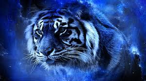 white tiger http 1080wallpaper white tiger