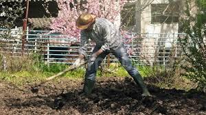 man hoeing vegetable garden soil stock footage video 69612774