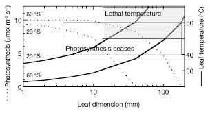 evolution of leaf form in land plants linked to atmospheric co2