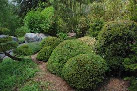 Japanese Style Garden by Robert Ketchell U0027s Blog Pruning And The Japanese Garden