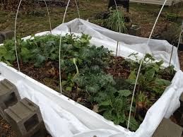 winter gardening cold frames and a greenhouse laura bruno u0027s blog