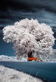80 most beautiful tree pictures from around the world