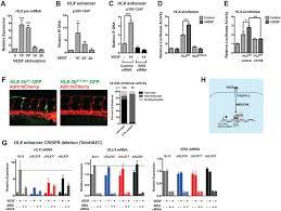 dynamic regulation of vegf inducible genes by an erk erg p300