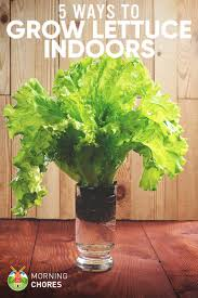 5 proven ways to growing lettuce indoors u0026 in containers year round